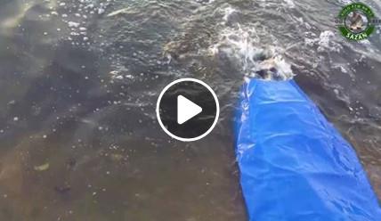 Zarybienie zalewu w Zakrzówku Szlacheckim